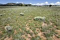 Near Coyote Canyon - Flickr - aspidoscelis (6).jpg