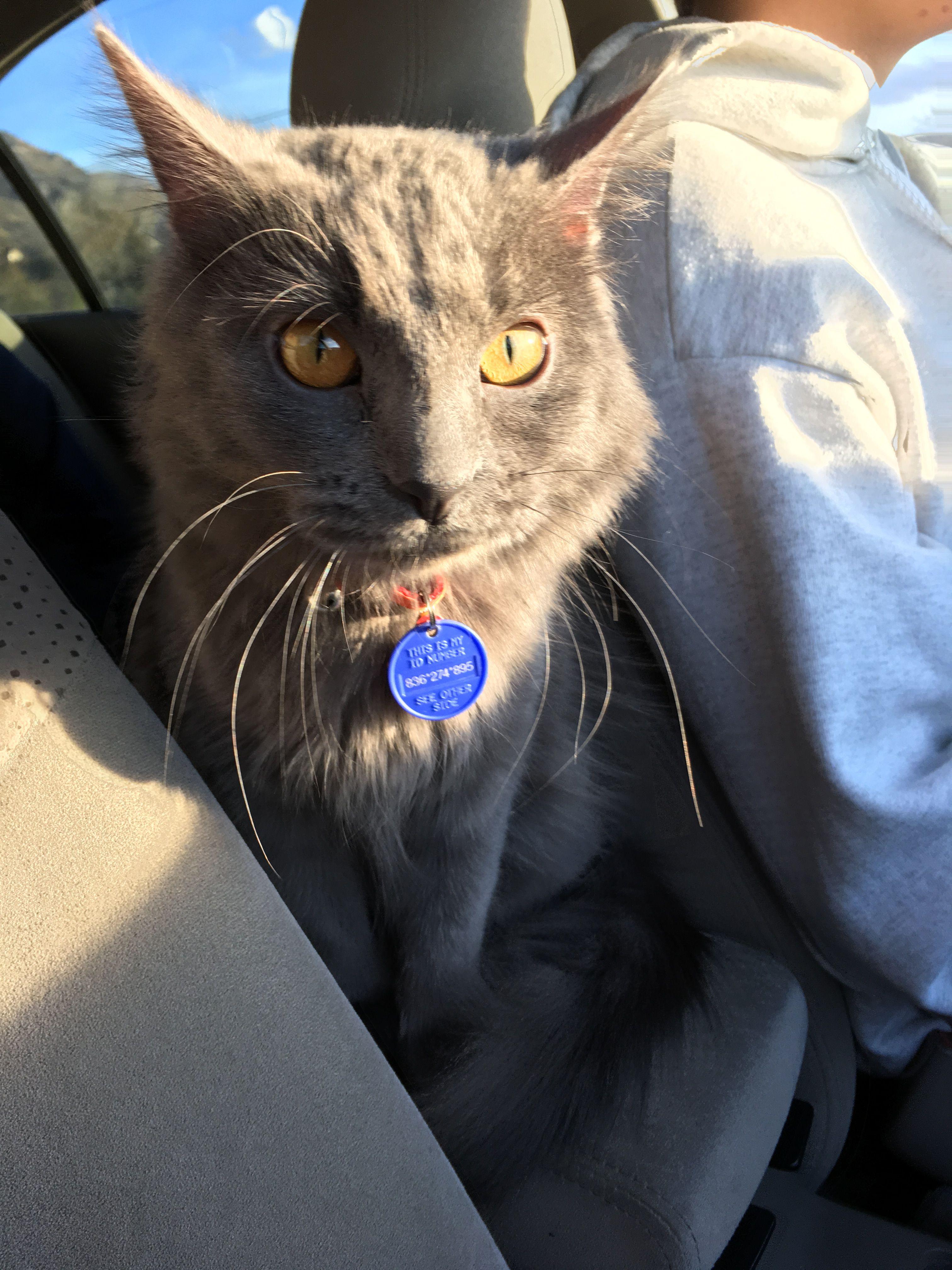 Cat Car Travel Accories