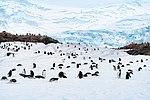 Neko Harbor, Antarctica (24313586423).jpg