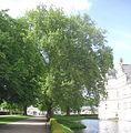 Neuhaus - Platanen am Schloss.jpg