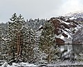 New Snow, Yosemite NP 5-15 (19666732656).jpg