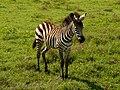 Ngorongoro Crater (61) (14148675985).jpg