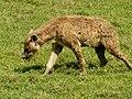 Ngorongoro Crater (71) (13961994769).jpg