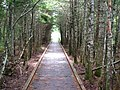 No End In Sight in Fundy National Park.jpg
