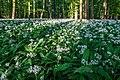 Nordkirchen, Naturschutzgebiet Ichterloh -- 2018 -- 2293.jpg