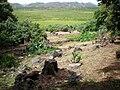 Oahu-Kailua-Ulupoheiau-gardenview-across-Kawainui.JPG