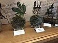 Old pharmacy herbs in exposition History of pharmacies in Kuks Hospital in Kuks, Trutnov District.jpg