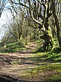 Old track leading to Higher Tregarne - geograph.org.uk - 748765.jpg