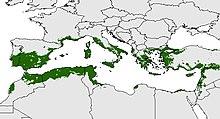 Potenziale distribuzione di ulivi nel bacino del Mediterraneo. Indicatore biologico del bacino del Mediterraneo. (Oteros, 2014)[3]