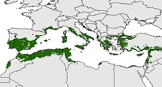 Mediterranean Basin - Potential distribution over the Mediterranean Basin of the olive tree—one of the best biological indicators of the Mediterranean Region