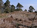One of the Rainbarrows, Duddle Heath - geograph.org.uk - 395668.jpg