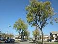 Ontario, CA, USA - panoramio (25).jpg