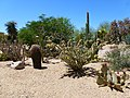 Open page for this picture to access my series Tour - In Coonly Garden, Mayo Clinic Phoenix, Spring 2013 - panoramio.jpg
