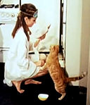 Orangey with Audrey Hepburn in Breakfast at Tiffanys.jpg