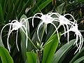 Orchid Garden - Botanical Garden - Singapore - 03 (34848525634).jpg