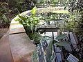 Orto botanico di Napoli 45.jpg