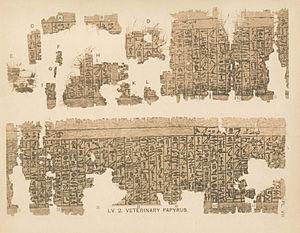 Kahun Papyri - Fragments of the Kahun Papyrus on veterinary medicine