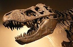 Kostra rodu Tyrannosaurus