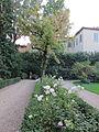 Palazzo della gherardesca, giardino 16.JPG