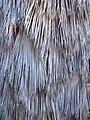 Palm Beard, Prospect Park, Redlands, CA 7-12 (7644744350).jpg
