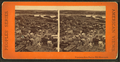 Panorama from Bunker Hill monument, from Robert N. Dennis collection of stereoscopic views.png