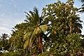Paradise Resort, Kumbakonam (1) (37237143190).jpg