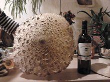 Macrolepiota procera wikip dia - Les champignons de jardin sont ils comestibles ...