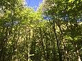 Parco Trinità Ghiffa.jpg