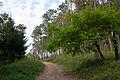 Parque Forestal de Beade (17695523316).jpg