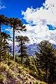 Parque Nacional Conguillío en lo Alto V.jpg