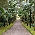 Parque Terra Nostra, Furnas, S. Miguel, Açores,Portugal - panoramio (18).jpg