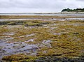 Part of Bembridge Foreland - geograph.org.uk - 484644.jpg