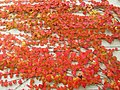 Parthenocissus tricuspidata IMG 4835.jpg