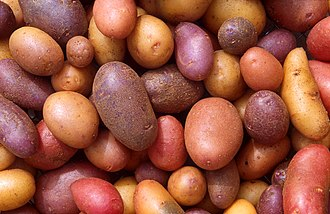 Potato - Potato cultivars appear in a variety of colors, shapes, and sizes.