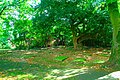 Path graves tree.jpg