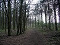 Path through the trees - geograph.org.uk - 393246.jpg