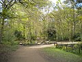 Path towards Ram Wood, Roundhay Park (geograph 5435436).jpg