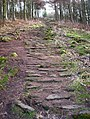 Pathway to Live Moor - geograph.org.uk - 1190609.jpg