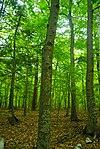 Peninsula Park Beech Forest.jpg