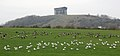 Penshaw Monument and birds.jpg