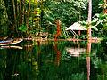 Pequeno lago, localizado no Bosque Rodrigues Alves.JPG