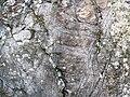 Peridotite & serpentinite (Upper Komatiitic Unit, Kidd-Munro Assemblage, Neoarchean, 2.711-2.717 Ga; southwest of the Potter Mine, east of Timmins, Ontario, Canada) 11 (46977676415).jpg