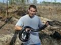 Pete Pattavina, USFWS Fish and Wildlife Biologist holds a threatened Eastern indigo snake (Drymarchon corais couperi) - DPLA - ec2ae2bc4640984e11cb82f9f1c0eafd.jpg