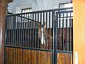 Pferd Horse1.jpg