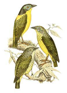 1867 in birding and ornithology