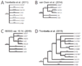 Phylogenetic trees of the Y-DNA haplogroup E1b1b1 (E-M35) .png