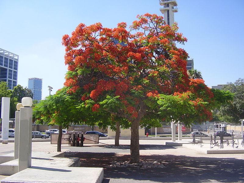 צאלון נאה בתל אביב