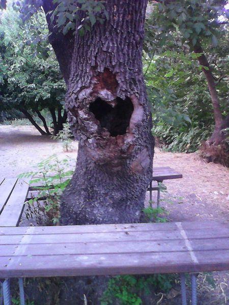 גזע עץ