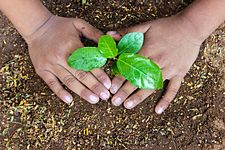 Plant a Sapling for Better Future.jpg