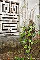 Plant de bétel (pagode But Thap) (4372771628).jpg